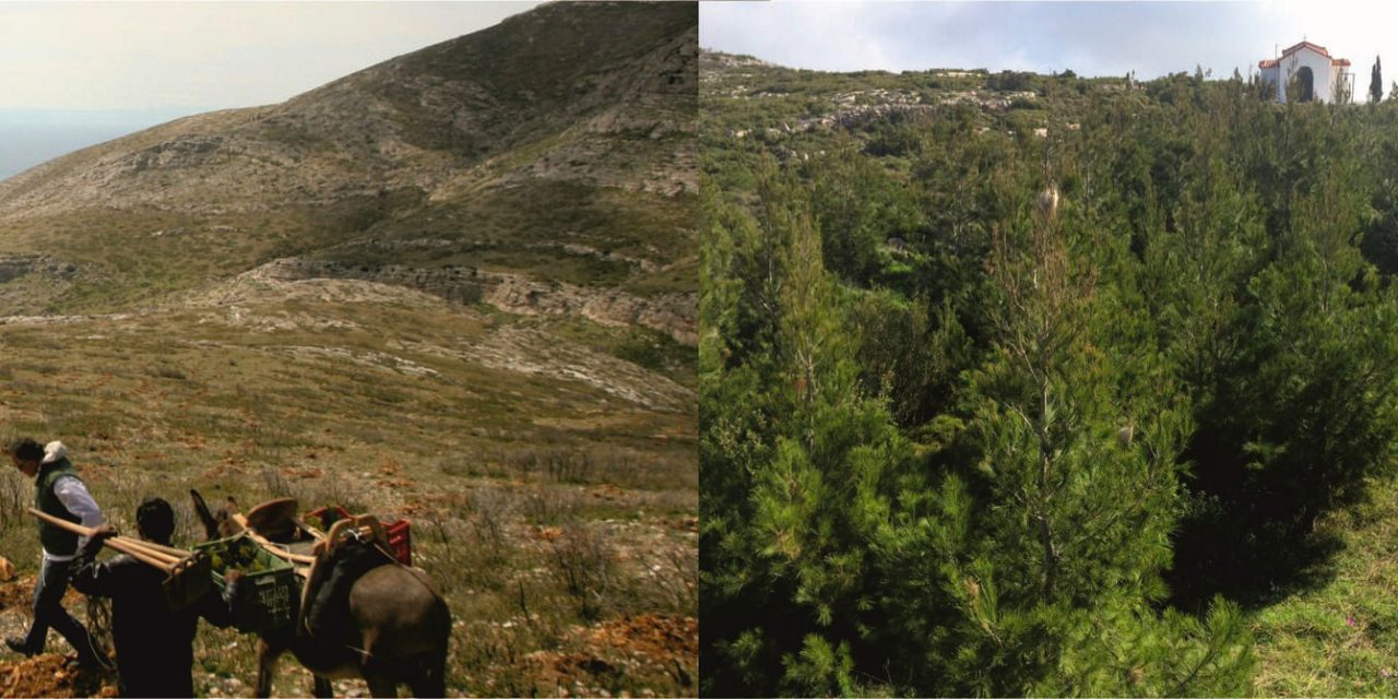 REFORESTATION IN ATTICA